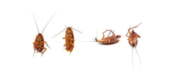 Control y eliminaci n de plagas de cucarachas control de for Control de plagas sevilla