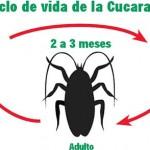 Empresas Control de plagas Sevilla y Córdoba