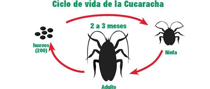 cucarachas2