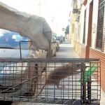 Malestar de vecinos de Sevilla por las plagas de ratas y cucarachas.