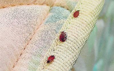 Control de plagas de chinches de cama