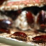 Andalucía a la cabeza en Plagas de cucarachas