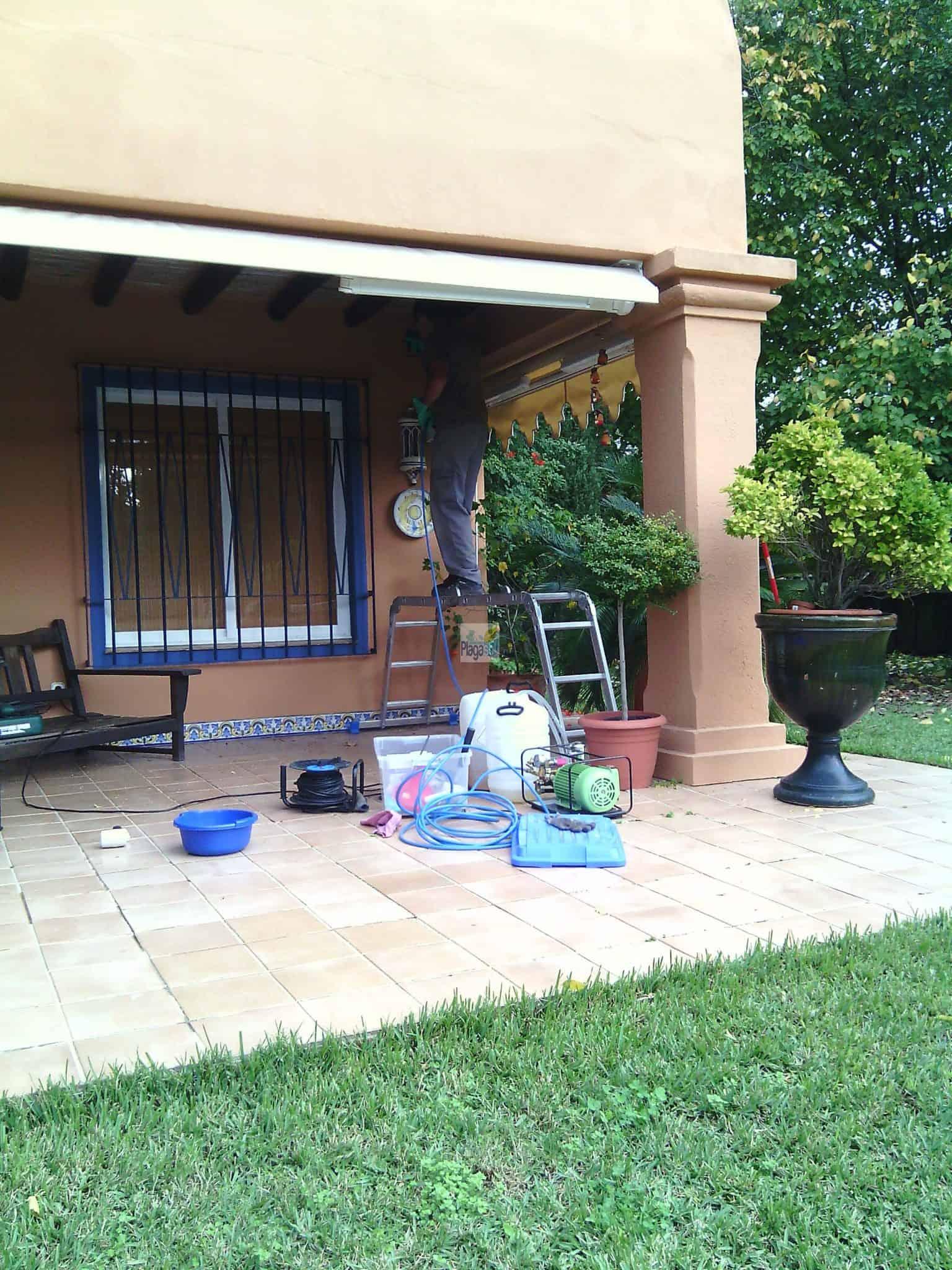 C Mo Identificar Una Plaga De Termitas En Casa O Empresa ~ Como Matar Termitas De Forma Casera