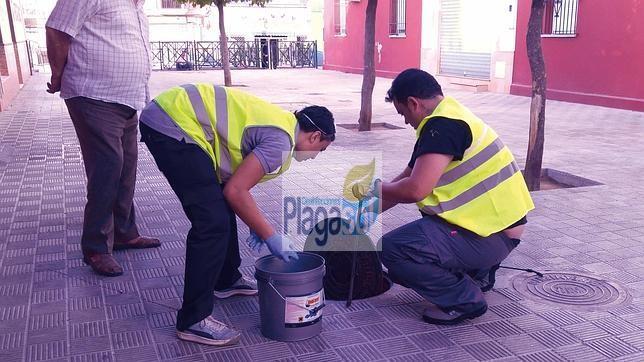 Eliminar ratas de plagas ayuntamientos