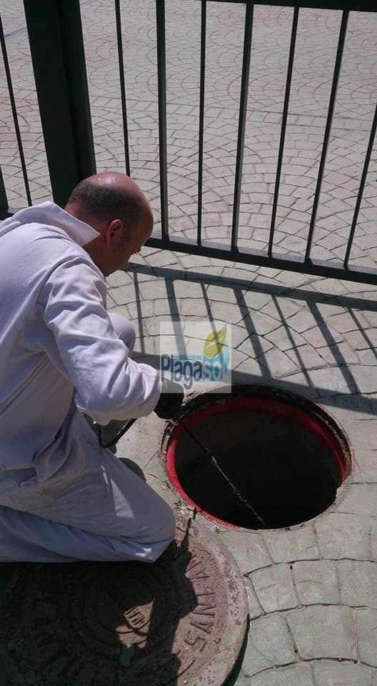 Control de Plagas Guardería Ayuntamiento de la Campana
