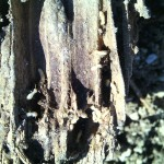 Plagas de termitas en la madera, ¿que hay que saber?