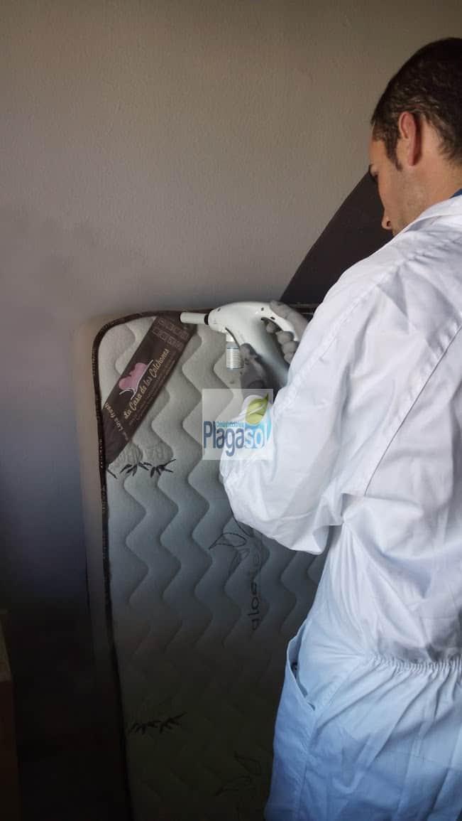 Eliminar plaga chinches de cama córdoba