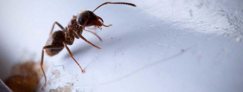 Tratamos y erradicamos cualquier tipo de plaga en su hogar o empresa, hormigas, cucarachas, termitas, chinches de cama, pulgas, etc…