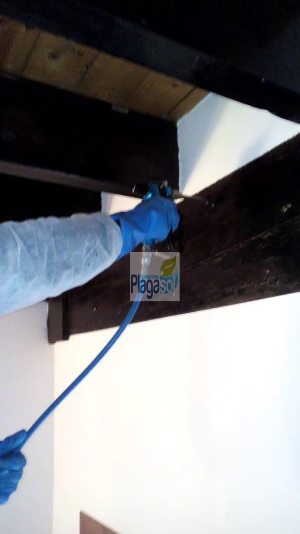 Tratamiento contra la carcoma en sevilla plagasol - Tratamiento carcoma madera ...