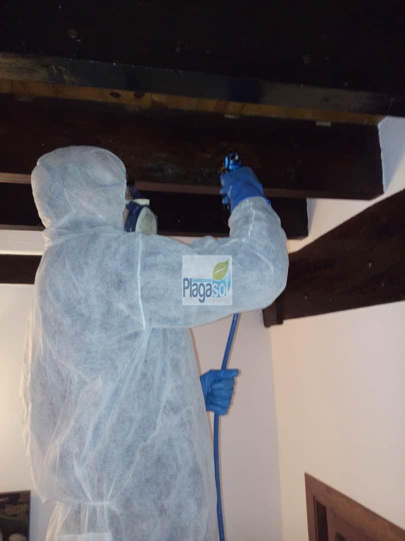 Labores de trabajo de nuestro técnico en tratamiento contra la carcoma sevilla