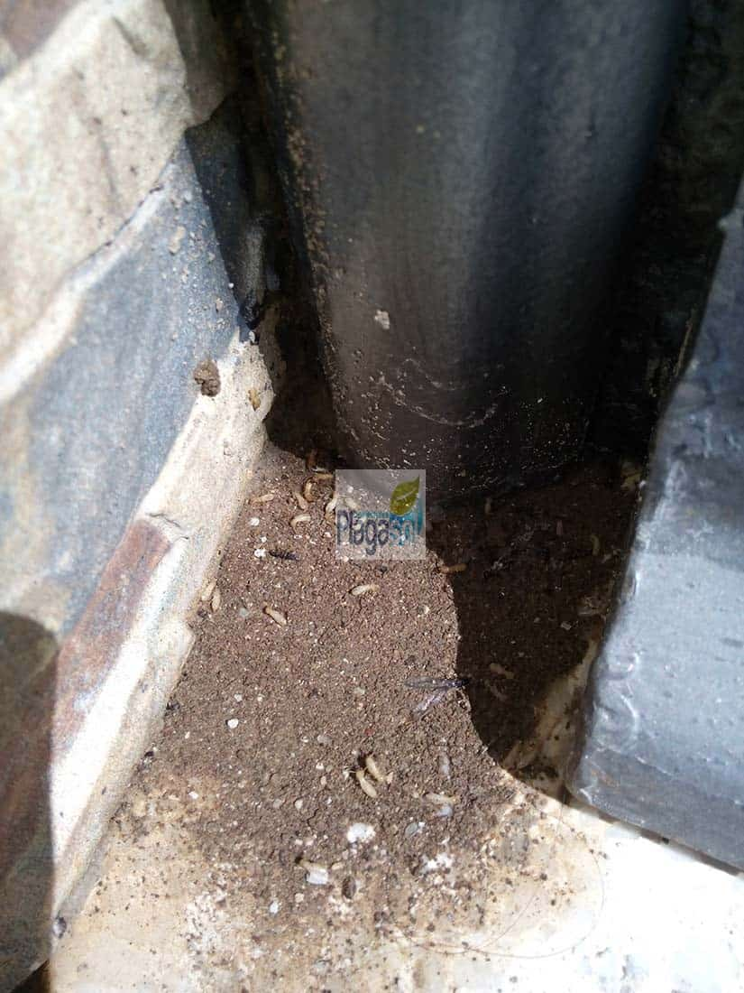 Termitas cuevas onda m laga control de plagas sevilla y for Control de plagas sevilla