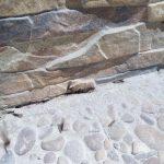 Termitas aladas, por tratamiento de inyección en fachada en Cuevas Ondas, Málaga
