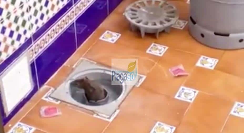 rata en casa del viso del alcor sevilla