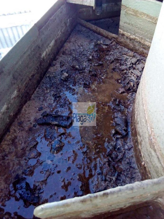 Trabajo de desinfecci n limpieza en una balsa de agua en for Control de plagas sevilla