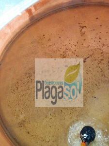 Limpieza de depósitos de aguas de consumo humano