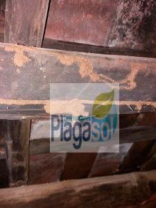 Vigas de madera afectada por ataques de termitas