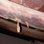 Vigas de madera en las que apreciamos los daños por ataques de termitas