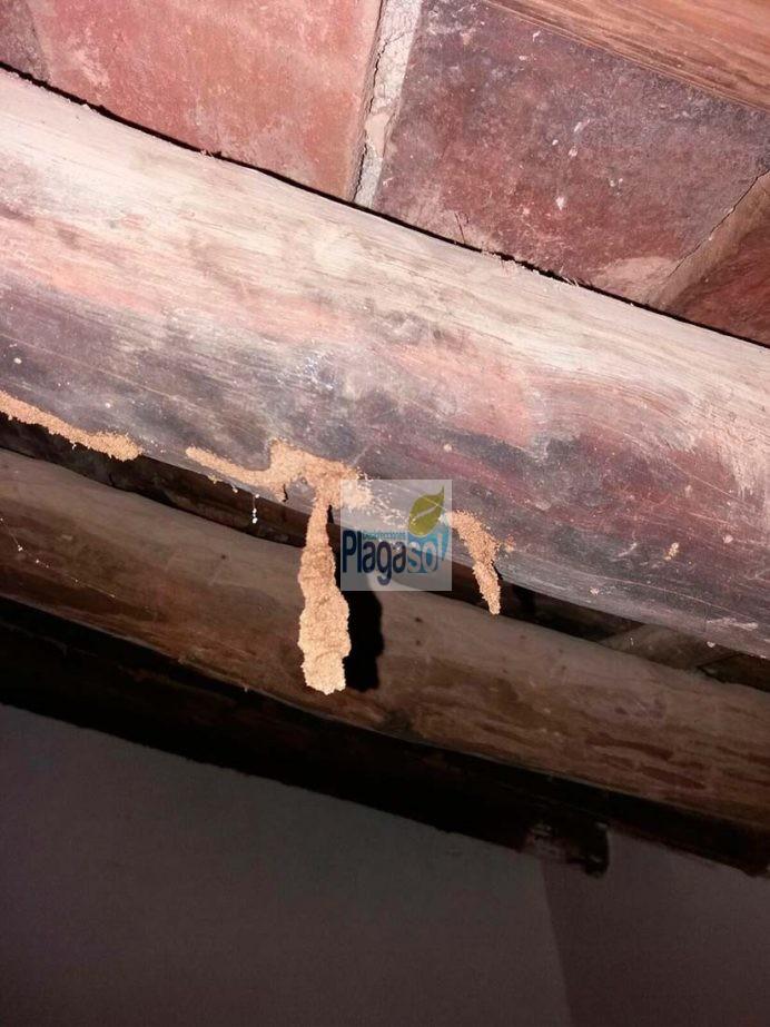 Vigas de madera afectada por ataques de termitas control - Restaurar vigas de madera ...