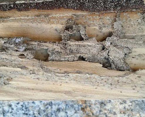 fumigar termitas casa Estepa Sevilla