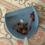 Restos de cucarachas en arqueta después de un tratamiento en vivienda particular en Córdoba.
