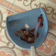 restos cucarachas casa Córdoba
