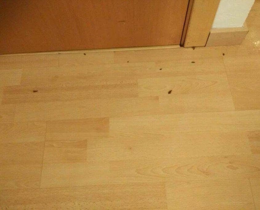 Cucarachas Muertas en vivienda de Sevilla