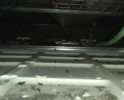 Falso techo con excrementos y restos de ratas