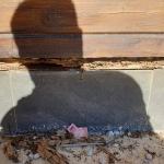 Plaga de termitas en casa rural de la Sierra Norte de Sevilla