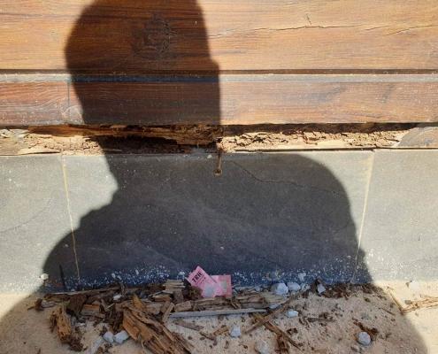Plaga de termitas en casa rural de la Sierra Norte de Sevilla1
